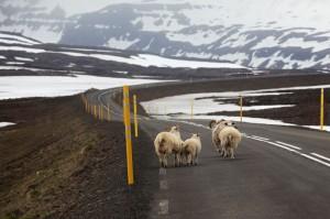 ISBC0188 Islande rural