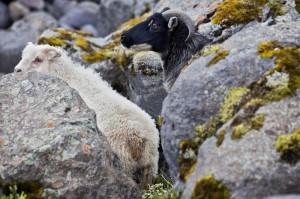 ISBC0332 Islande rural