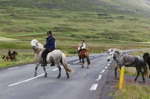 ISBC0438 Islande rural