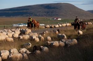 ISBC0724 Islande rural