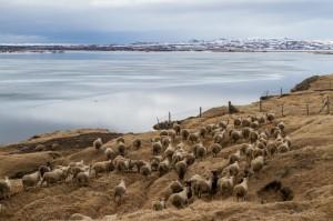 ISBC0839 Islande rural