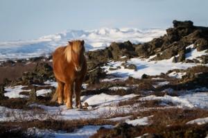 ISBC0927 Islande rural