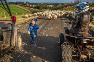 ISBC1544 Islande rural