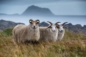 ISBC1586 Islande rural